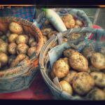 多肉の冬仕度とお芋の収穫